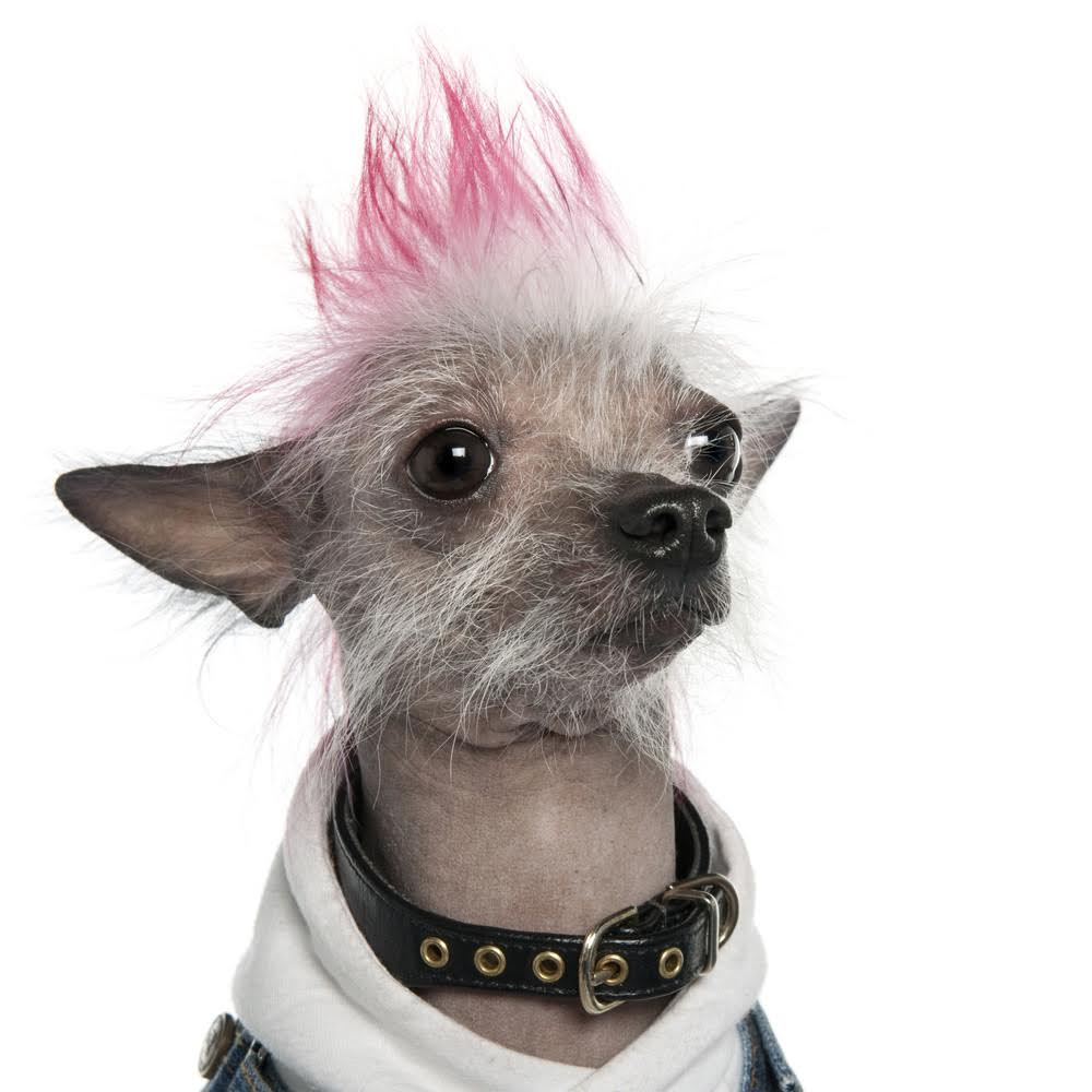 We Gave Die Antwoord Haircuts To Several Animals At This Local