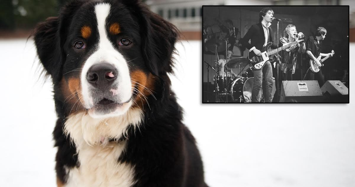 Is Punk Dead How The Hell Should I Know Im A Bernese