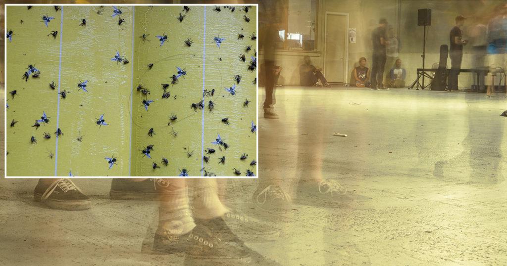 flypaper, venue, floor