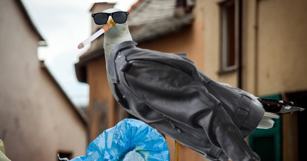 cool, seagulls, leather, jacket