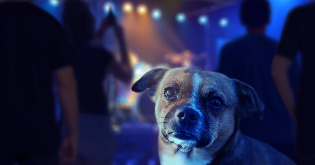 dog, show, encore