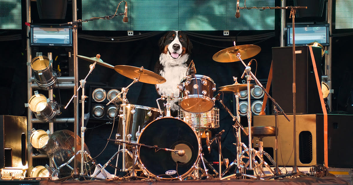 Ill Allow It Says Battle Of The Bands Judge Of Dog Drummer