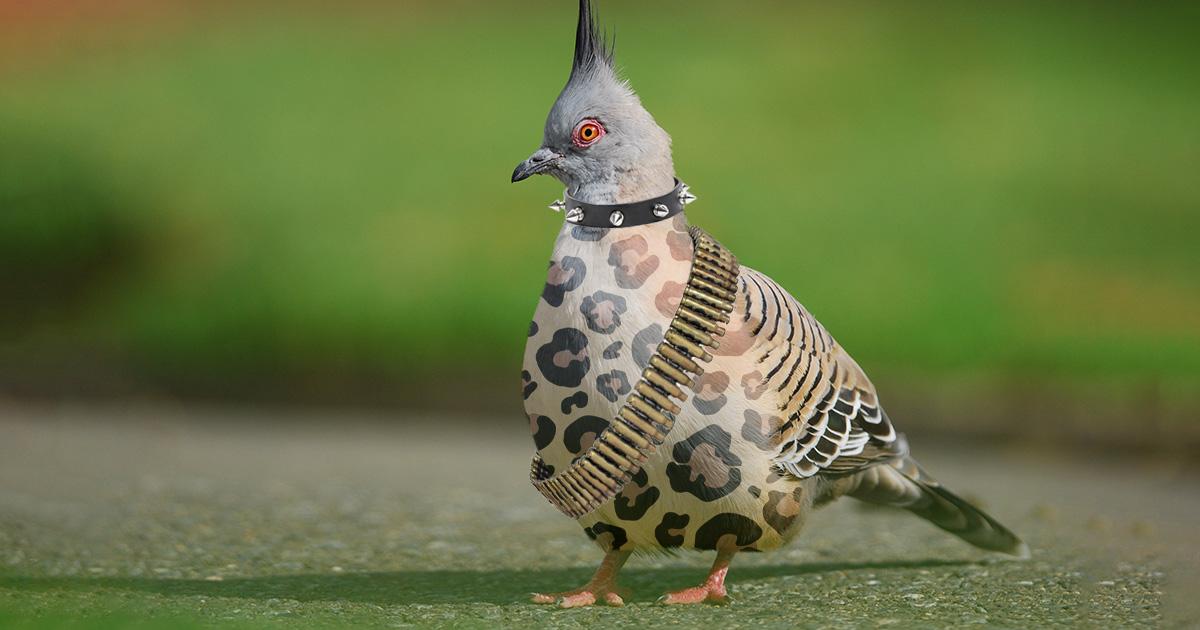 pigeon, crust punk, crust, punk