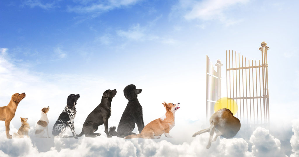 dog, dogs, heaven, dog heaven, St. Peter, god, line, wait