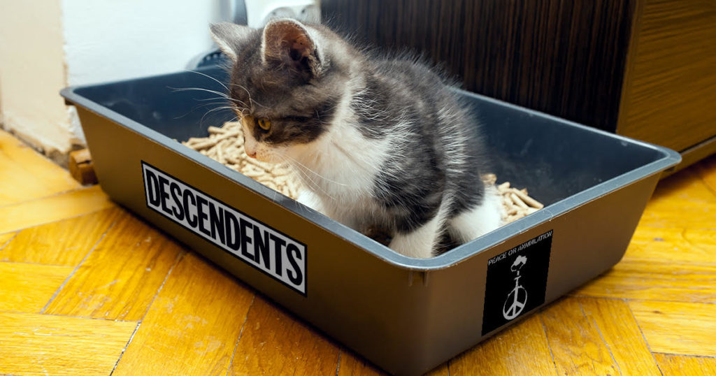 litter box, cat, toilet