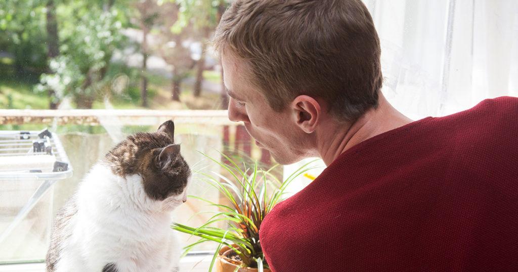 cat, voice ,study
