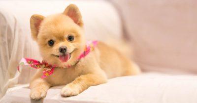 dog, racist, bark, instagram, famous, influencer, essay