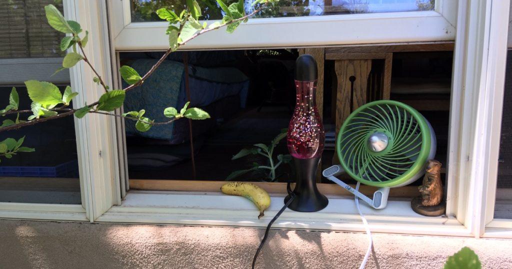 untucked, household, quarantine