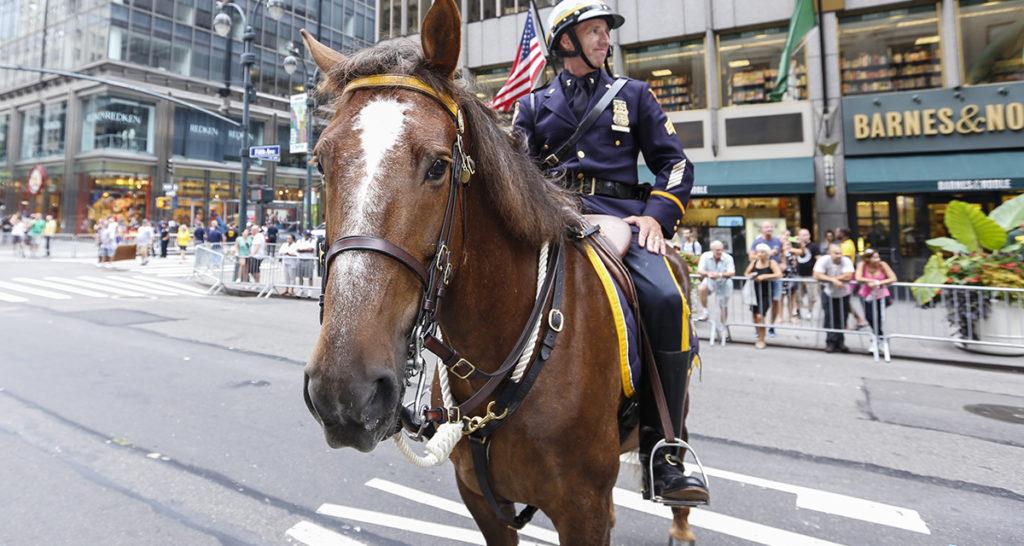 horse, police horse