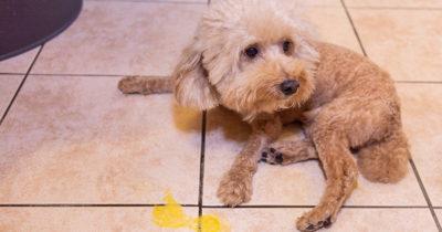 dog, sad, depressed, vomit, gross, puppy
