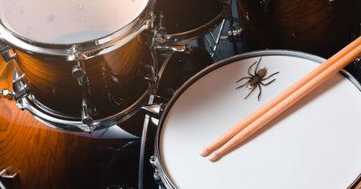 spider, huge, arachnid, scary, bug, drums, kit