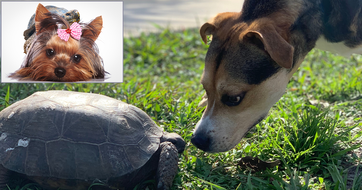 Heartbreaking: This Turtle and Dog Were Best Friends Until