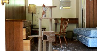 cat, cute, funny, silly, tree, cat house, rug, cardboard, catnip, pet, feline, toy, mansion, luxury, fancy, rich, wealthy cat